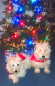 The AV Pups, Arwen &amp; Wesley, wish all a Merry Christmas, from gramma's house in Pittsburgh!